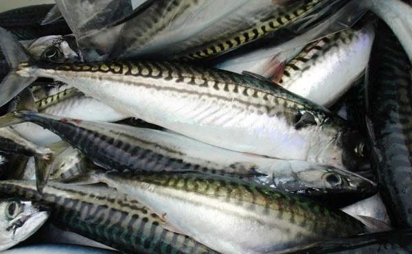 Cách nhận biết cá bị ướp hàn the và cá tươi