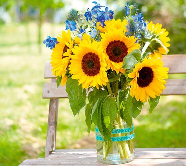 Hoa Hướng Dương tượng trưng cho người mẹ là tấm gương sáng
