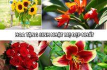 5 mẫu hoa tặng sinh nhật mẹ đẹp nhất