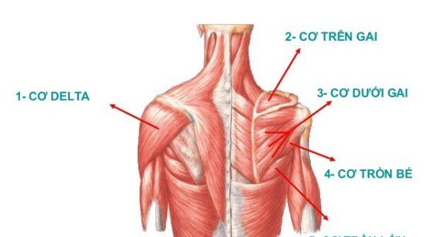 Bệnh teo cơ Delta có di truyền không, có chữa được không? 1