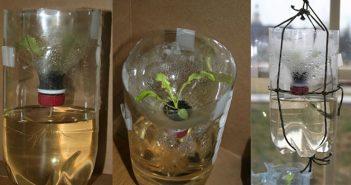 Hướng dẫn bạn cách trồng rau thủy canh bằng chai nhựa