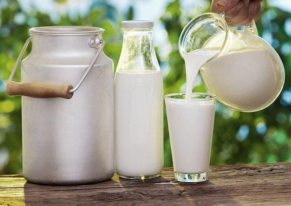 Sữa bò, sữa dê đã qua tiệt trùng