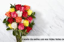 Ý nghĩa của những loài hoa tượng trưng cho tình yêu thương