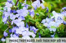 Phong thủy người tuổi Thân hợp với hoa gì?