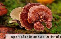 Địa chỉ bán nấm lim xanh tại tỉnh Hà Nam tốt nhất